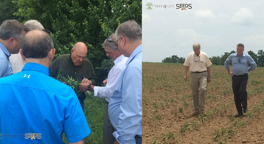 Tree of Life Seeds Signs Broad Licensing Agreement with Atalo Holdings