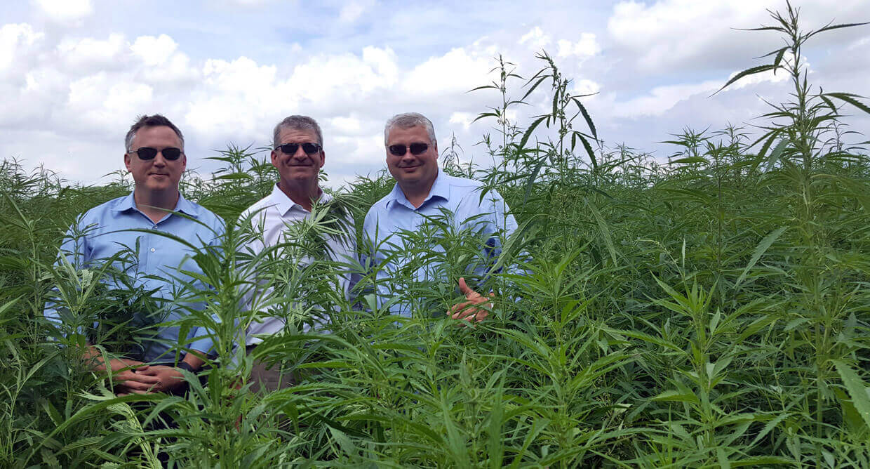 Tree of Life Seeds Team, in Cannabis Hemp Field
