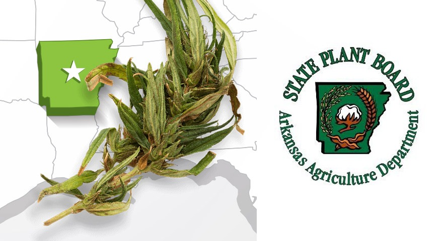Arkansas State Plant Board Hears Public Comments on Proposed Industrial Hemp Regulations