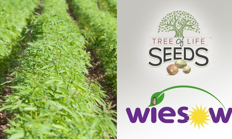 Tree of Life Seeds Partner with Wiesow