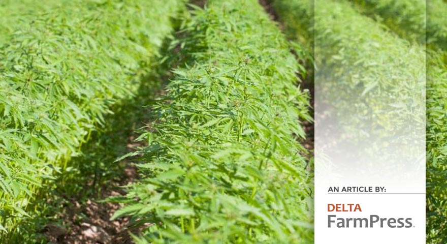 Tree of Life Seeds - Article by - Delta Farm Press - Industrial hemp regulations passed by ASPB