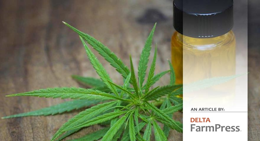Tree of Life Seeds - Article by - Delta Farm Press - Where does the industrial hemp/medical marijuana industry stand in Arkansas?