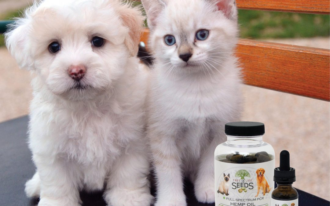 CBD Oil for Pets: Everything You Need To Know